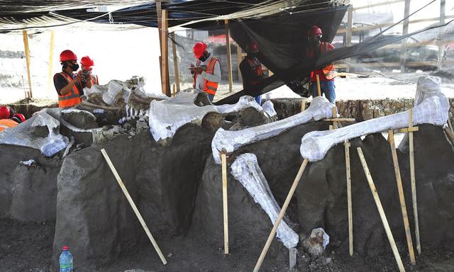 """Khai quật """"nghĩa địa"""" voi ma mút ở sân bay Mexico - ảnh 1"""