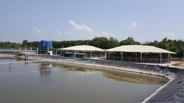 Giải pháp công nghệ nuôi thâm canh tiết kiệm nước và bền vững - ảnh 1