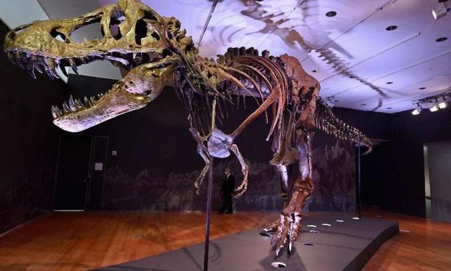 Bộ xương khủng long bạo chúa lớn nhất thế giới ra đấu giá - ảnh 1
