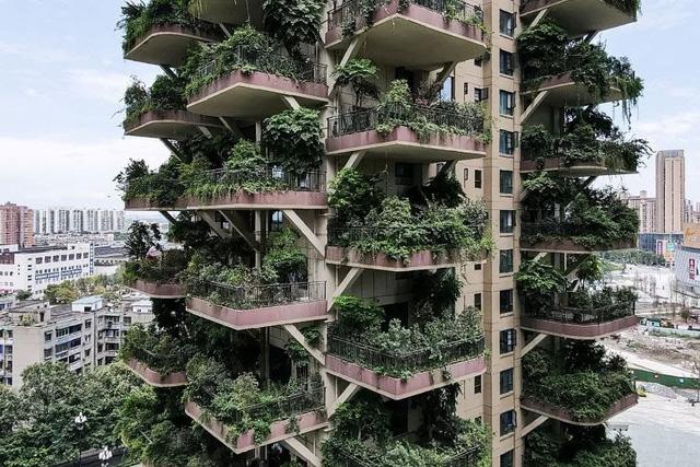 """""""Thiên đường"""" sinh thái đô thị bị bỏ hoang vì nhiều muỗi - Ảnh 2."""