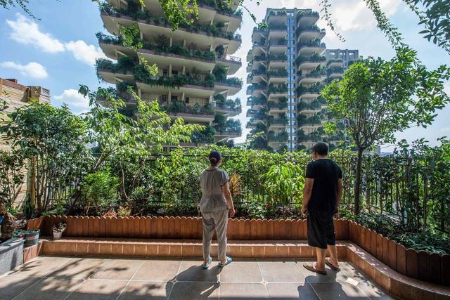 """""""Thiên đường"""" sinh thái đô thị bị bỏ hoang vì nhiều muỗi - Ảnh 3."""