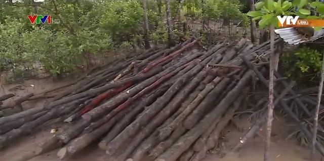 Báo động tình trạng xâm nhập trái phép Vườn quốc gia Mũi Cà Mau - Ảnh 1.
