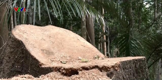 Tái diễn nạn phá rừng tại rừng phòng hộ Sró - Ảnh 1.