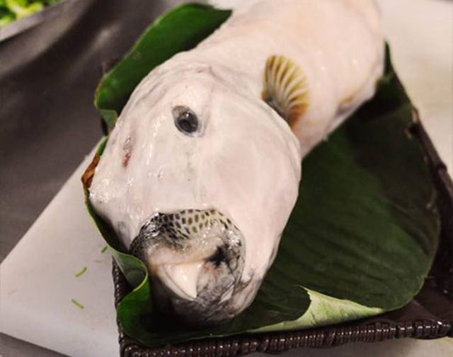 Ăn cá mặt thỏ, người đàn ông 40 tuổi hôn mê, tê liệt hoàn toàn - Ảnh 2.