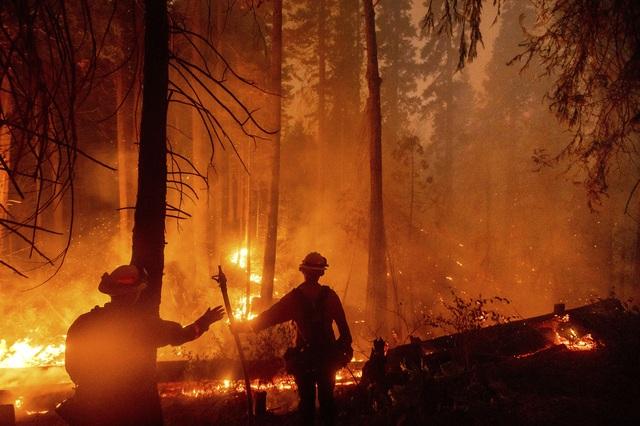 Hỏa hoạn tại California (Mỹ) thiêu rụi diện tích rừng kỷ lục - Ảnh 2.