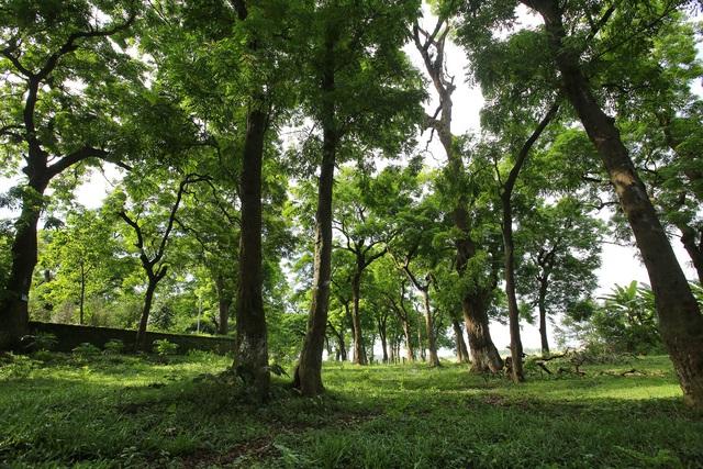 Đã đến lúc Việt Nam cần coi carbon như một thứ hàng hóa? - Ảnh 1.