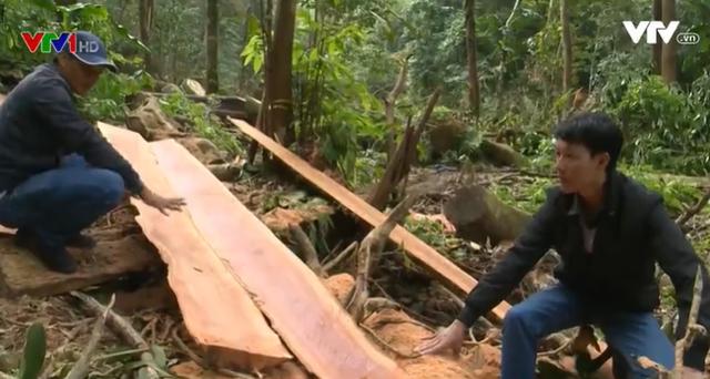 Vẫn còn nhiều điểm nóng chặt phá rừng - Ảnh 1.