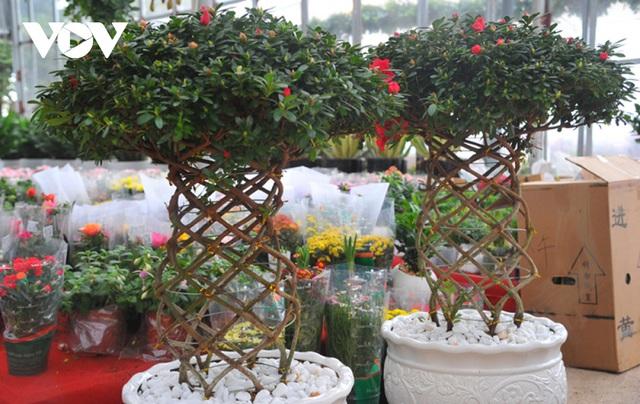 Những cây cảnh lạ mắt đang khuynh đảo thị trường Tết năm nay - Ảnh 1.