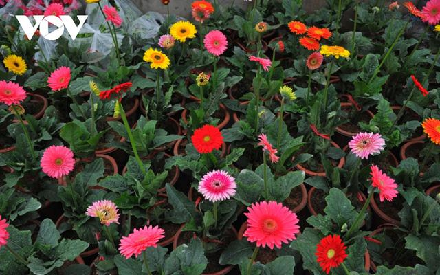 Những loại hoa chơi Tết dành cho... nhà nghèo - ảnh 5