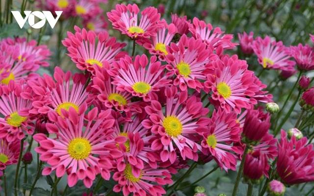 Những loại hoa chơi Tết dành cho... nhà nghèo - ảnh 7