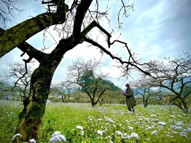 Phim Tết Yêu hơn cả bầu trời đốn tim với Mộc Châu tuyệt đẹp - Ảnh 2.