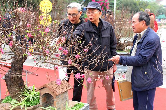 Không khí Tết ngập tràn tại Lễ hội hoa đào Nhật Tân - Ảnh 1.