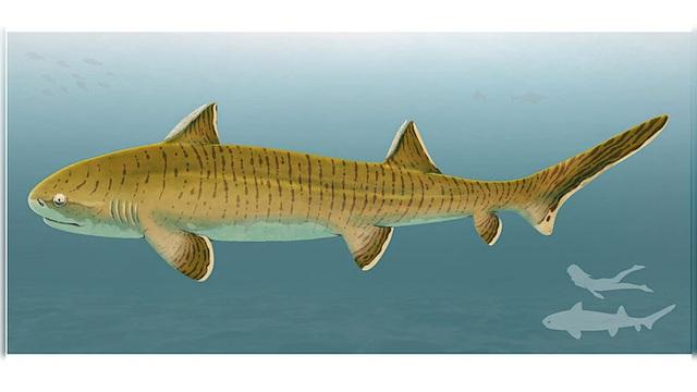 Hóa thạch cá mập 150 triệu năm hé lộ về quá khứ của Trái Đất - ảnh 1