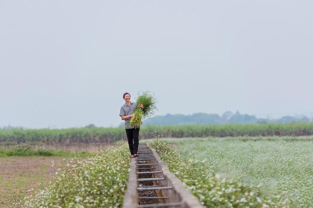 Mãn nhãn với cánh đồng mùi già rộng lớn nhất Việt Nam - Ảnh 5.