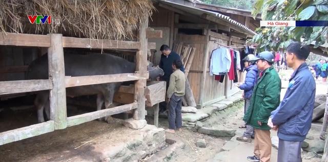 Hà Giang phòng chống đói rét cho gia súc và cây trồng - Ảnh 1.