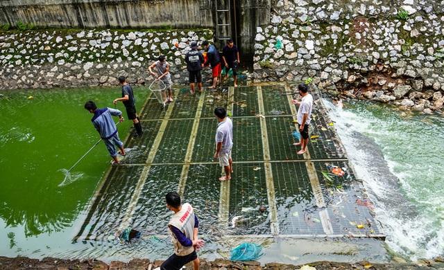 Sông Tô Lịch bất ngờ xanh, nhiều người dân vui mừng bắt hàng tạ cá - Ảnh 4.