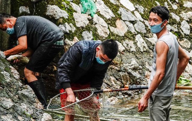 Sông Tô Lịch bất ngờ xanh, nhiều người dân vui mừng bắt hàng tạ cá - Ảnh 6.