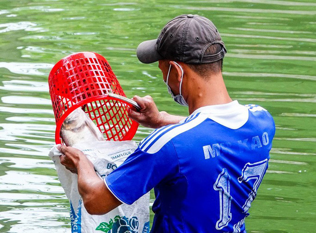 Sông Tô Lịch bất ngờ xanh, nhiều người dân vui mừng bắt hàng tạ cá - Ảnh 9.