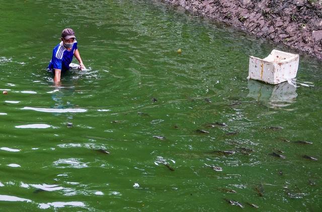 Sông Tô Lịch bất ngờ xanh, nhiều người dân vui mừng bắt hàng tạ cá - Ảnh 10.