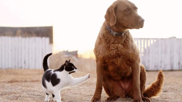 Chó và mèo, loài nào thông minh hơn? - ảnh 2