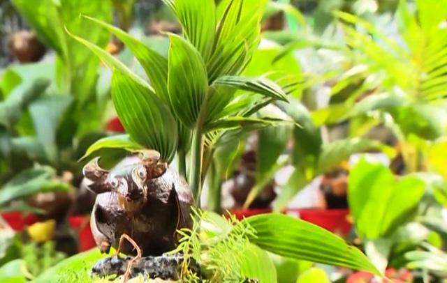 Những sáng tạo độc đáo trên hình tượng con trâu truyền thống - Ảnh 4.