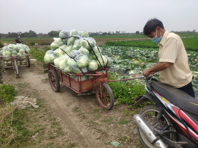Công chức bỏ tiền túi mua bắp cải, Bí thư, Chủ tịch xã nhận đặt hàng online - Ảnh 3.