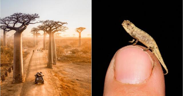 Phát hiện loài bò sát có kích thước nhỏ nhất thế giới - ảnh 4