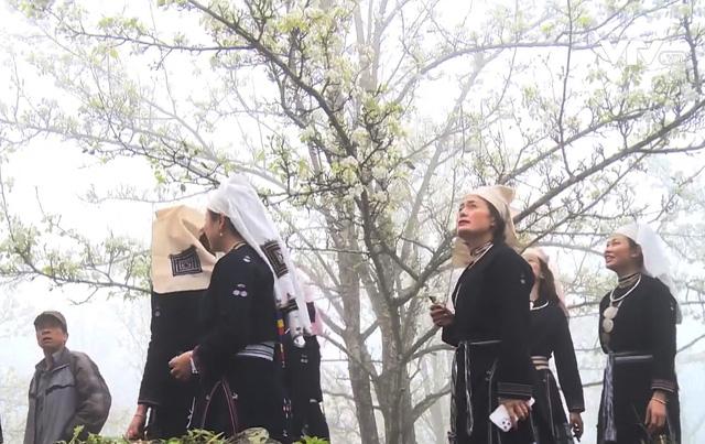 Quyến rũ mùa hoa lê ở vùng cao Tuyên Quang - Ảnh 2.
