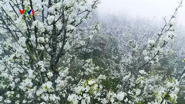 Quyến rũ mùa hoa lê ở vùng cao Tuyên Quang - Ảnh 1.