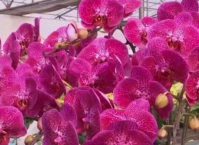 Hong Kong (Trung Quốc) cho phép chợ hoa hoạt động trở lại - Ảnh 2.