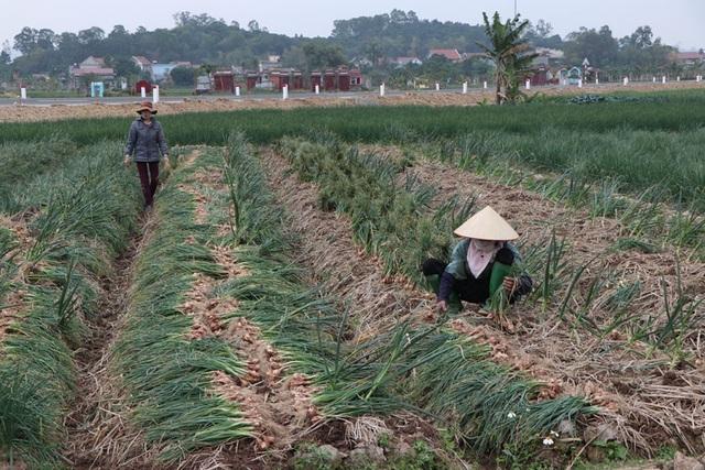 Hỗ trợ tiêu thụ nông sản, thực phẩm từ vùng dịch - Ảnh 2.