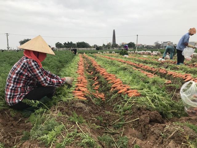 Hỗ trợ tiêu thụ nông sản, thực phẩm từ vùng dịch - Ảnh 1.