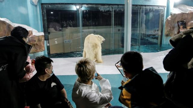 Độc đáo, khách sạn gấu Bắc Cực khai trương ở Trung Quốc - ảnh 1