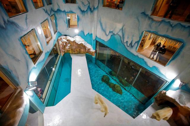 Độc đáo, khách sạn gấu Bắc Cực khai trương ở Trung Quốc - ảnh 2