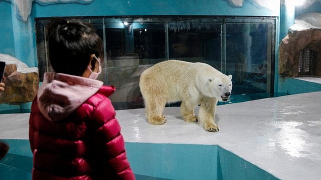 Độc đáo, khách sạn gấu Bắc Cực khai trương ở Trung Quốc - ảnh 3