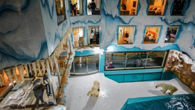Độc đáo, khách sạn gấu Bắc Cực khai trương ở Trung Quốc - ảnh 4