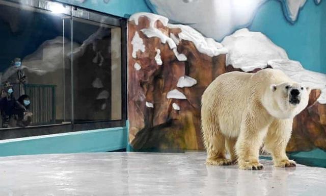 Độc đáo, khách sạn gấu Bắc Cực khai trương ở Trung Quốc - ảnh 5