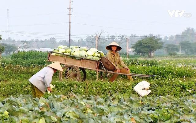 Nông sản ở nhiều địa phương rẻ như cho vẫn không có người mua - Ảnh 2.