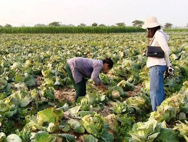 Nông sản ở nhiều địa phương rẻ như cho vẫn không có người mua - Ảnh 1.