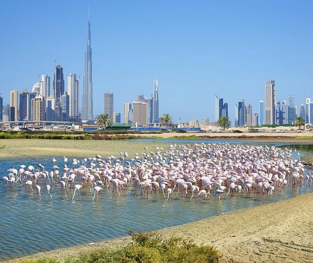 """13 trải nghiệm tuyệt vời nhưng """"miễn phí"""" tại Dubai - ảnh 9"""