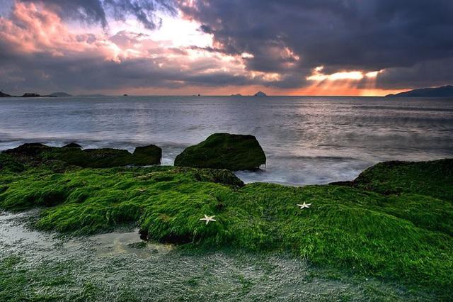 Mê mẩn thảm rêu xanh ấn tượng ở biển Nha Trang - Ảnh 3.