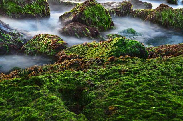 Mê mẩn thảm rêu xanh ấn tượng ở biển Nha Trang - Ảnh 2.