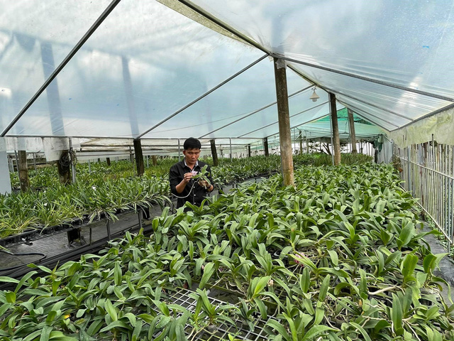 Trương Tuấn Anh chia sẻ bí kíp để thành công trong nuôi trồng hoa lan - Ảnh 2.