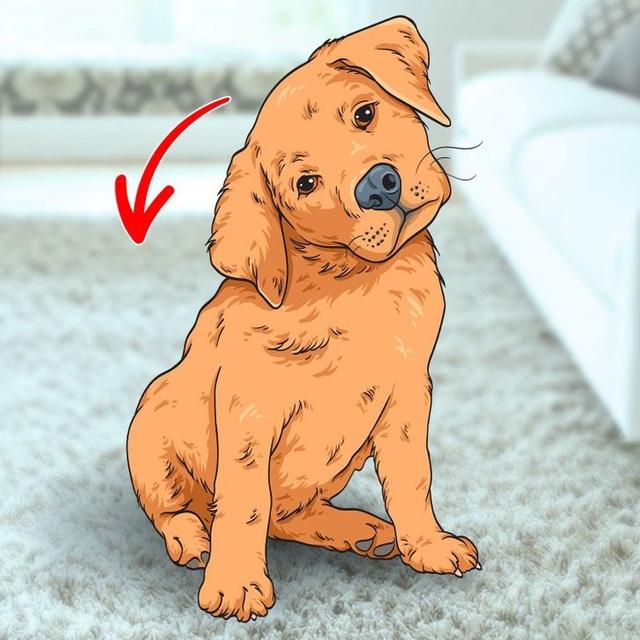 Giải mã 7 hành vi kỳ lạ hay gặp ở cún cưng - ảnh 6