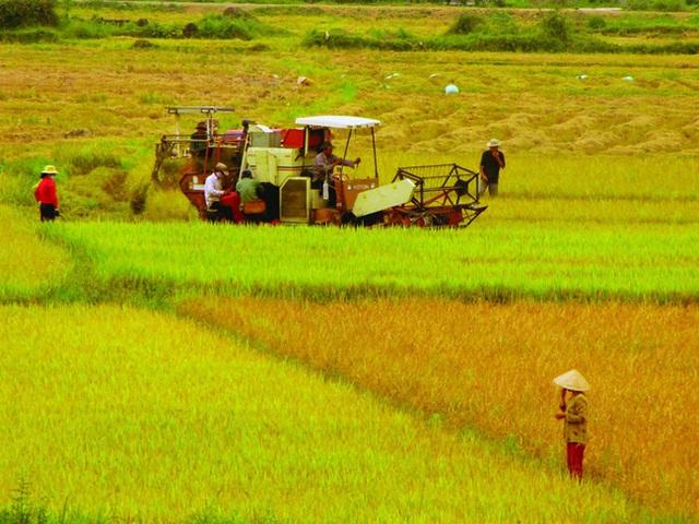 Cần tư duy mới khi chuyển đổi đất nông nghiệp - Ảnh 1.
