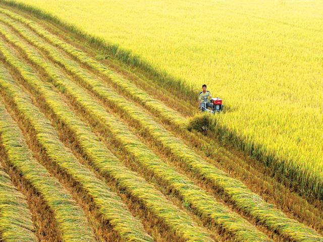 Cần tư duy mới khi chuyển đổi đất nông nghiệp - Ảnh 2.