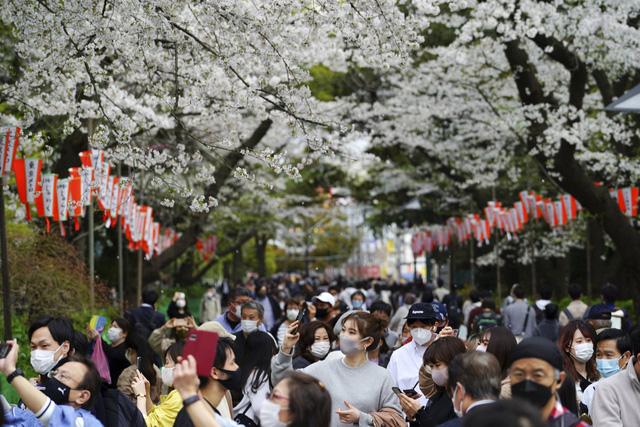 Hoa anh đào Nhật Bản bung nở rực rỡ, đẹp đến choáng ngợp - Ảnh 3.