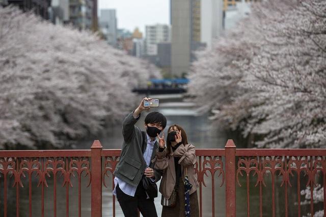 Hoa anh đào Nhật Bản bung nở rực rỡ, đẹp đến choáng ngợp - Ảnh 8.