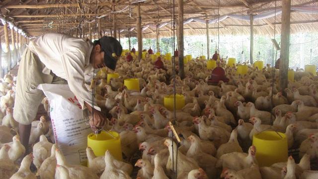 Giá thức ăn chăn nuôi tăng chóng mặt - Ảnh 1.