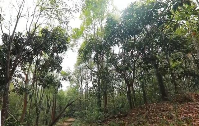 Nan giải bài toán trồng lại rừng vẫn đảm bảo môi trường và kinh tế - Ảnh 4.